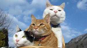 猫咪养成类手游推荐