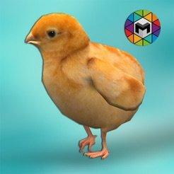 小鸡模拟器