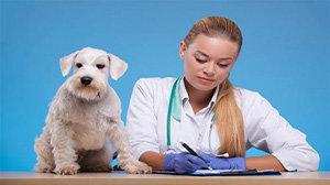 宠物资讯软件