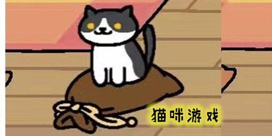 猫咪大烦恼