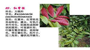 植物识别软件