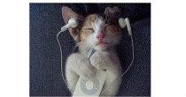 必备的手机听歌软件