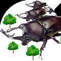 甲虫之间的战斗