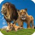 丛林王国狮子家族
