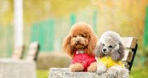 宠物社区软件下载