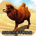 野骆驼的赛车模拟器