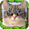 流浪猫模拟器