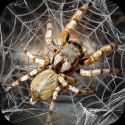 蜘蛛模拟生存
