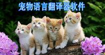 宠物语言翻译器软件大全