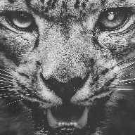 雪豹画质助手安卓版