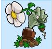 植物大战僵尸雨版
