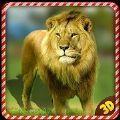 野生獅子憤怒報復