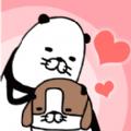 熊猫与狗无论何地狗狗都可爱