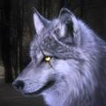 狼模擬器3D的野生動物IOS版