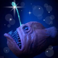 燈籠魚飼養