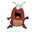 养蟑螂赚钱