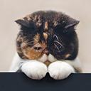 貓齡計算器