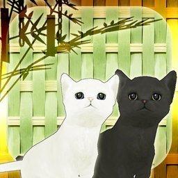 小猫和七夕