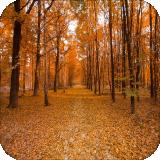 森林自然壁纸