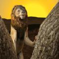 野生狮子生存模拟器手游