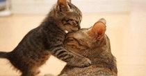 好玩的猫咪养成手游大全