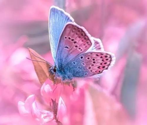 和平精英Rain butterfly