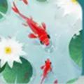 鱼戏荷塘领红包