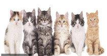 治愈系的貓咪類游戲合集