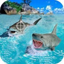 鯊魚捕獵手