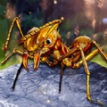 解救星際小螞蟻