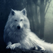森林荒原狼模拟器破解版