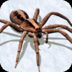 打蜘蛛模拟器中文版